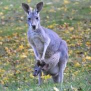 Foto: © Archiv Opel Zoo