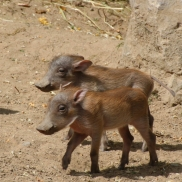Foto: Archiv Opel-Zoo