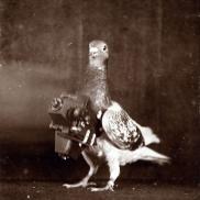 Foto: SDTB / Historisches Archiv, Nachlass Julius Neubronner