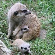 Foto: Archiv Opel Zoo
