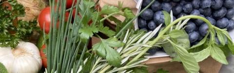 Frisch & Regional - Zwei Mainbauerkisten inklusive Lieferug mit frischem Gemüse aus der Region!