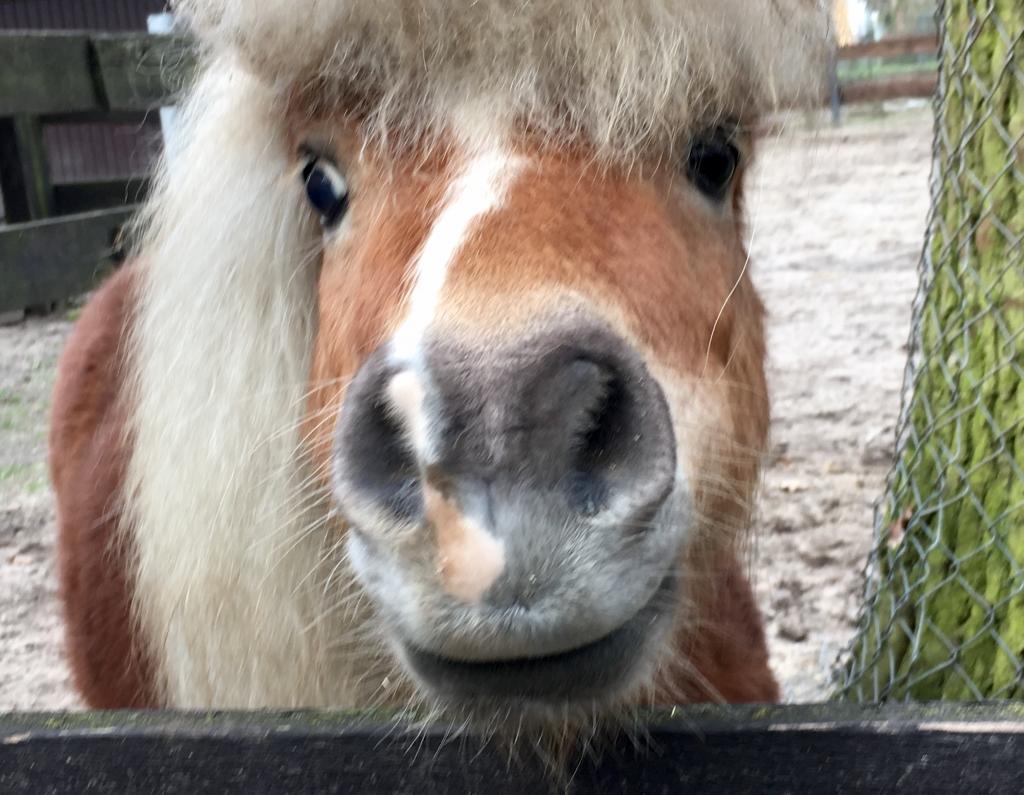 Journal Frankfurt Nachrichten Der Kobelt Zoo Rustet Sich Fur Den