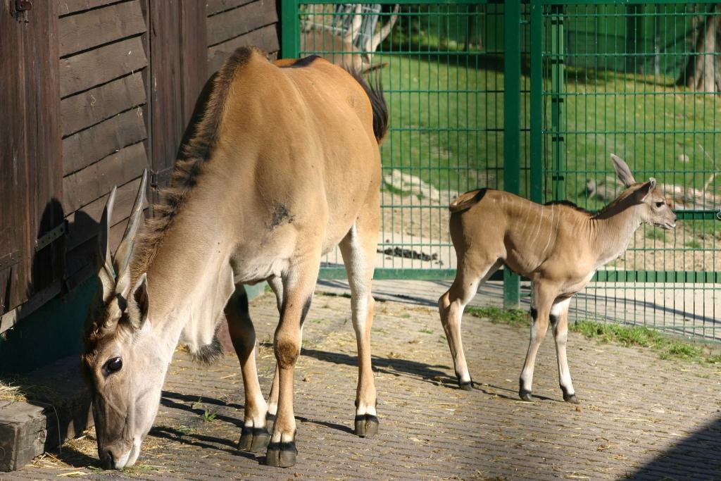 journal frankfurt nachrichten - baby-boom im opel zoo - nachwuchs