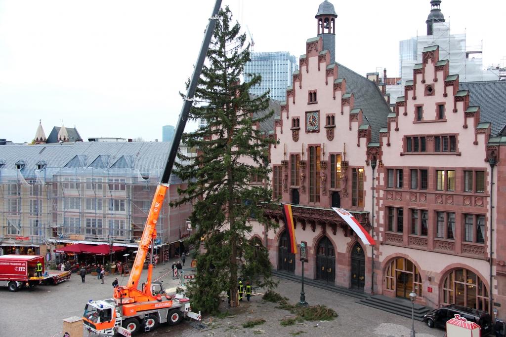 Weihnachtsbaum Frankfurt.Journal Frankfurt Nachrichten 33 Meter Fichte Auf Dem Römerberg