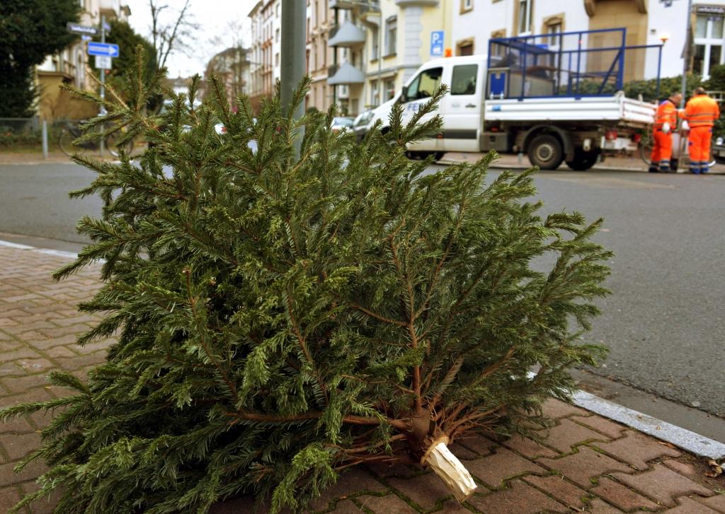 Weihnachtsbaum Frankfurt.Journal Frankfurt Nachrichten Wohin Mit Dem Weihnachtsbaum Fes
