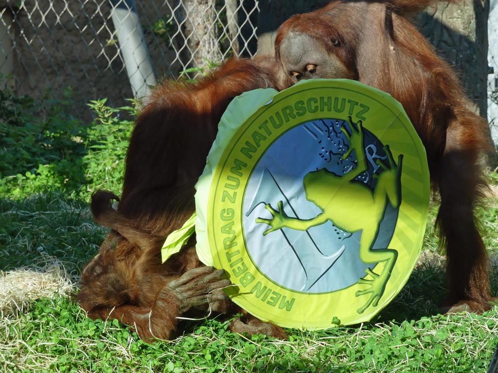 Foto: Zoo Frankfurt