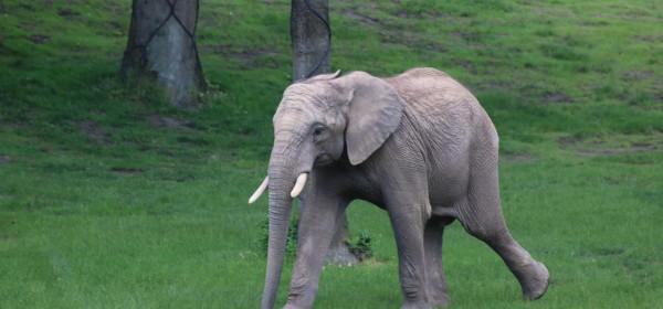 Foto: Opel-Zoo